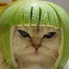 Аватар пользователя sauzzza